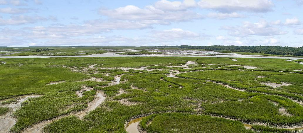Sable on the Marsh, Charleston - Lowcountry Marshlands