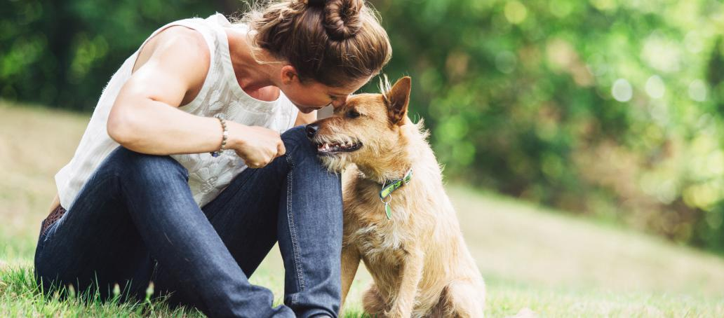 Townes at Cheswick, Raleigh - Pet Friendly with Pet Care Kiosks